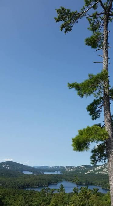 solo tree close up
